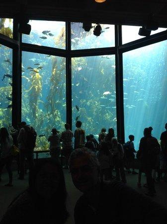 Monterey Bay Aquarium: Uma bela amostra do mundo marinho...