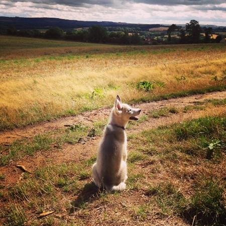 Faringdon Folly Tower and Woodland: Our puppy enjoying the views from the Folly Woodland