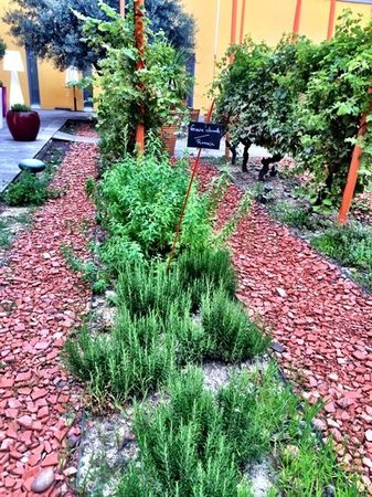 Radisson Blu Hotel, Toulouse Airport : outside herb garden near dining area