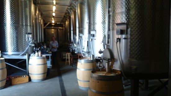 Turnbull Wine Cellars: タンクと樽に囲まれた試飲室