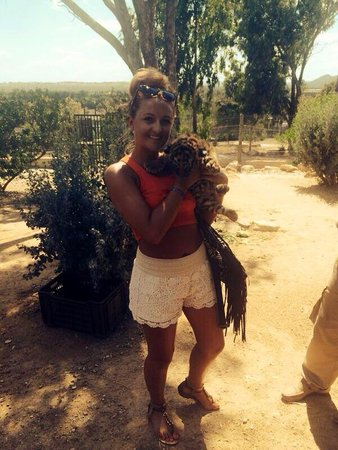 Friguia Park: Baby tigerr ����