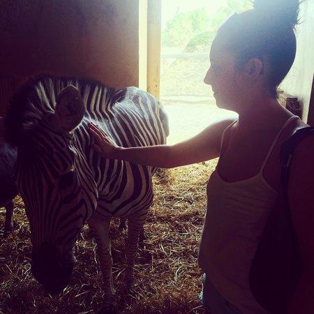 Friguia Park: Zebra