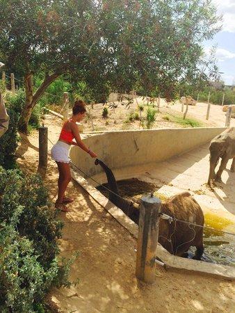 Friguia Park: Elephantt