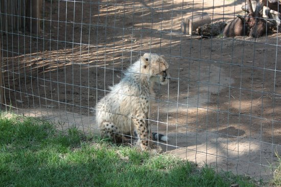 Cango Wildlife Ranch: Baby