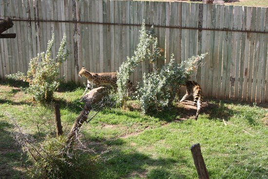 Cango Wildlife Ranch: Some fun