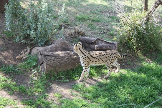 Cango Wildlife Ranch: Servil