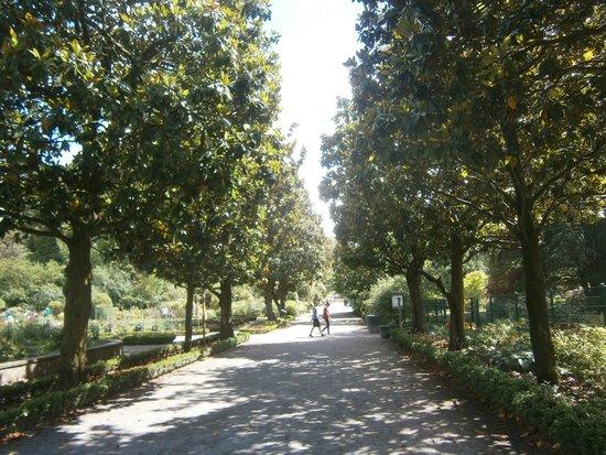 Parc de la Tete d'Or: Camino