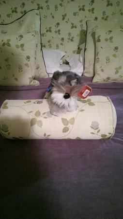 Lake Vyrnwy Hotel & Spa: Do not disturb pup