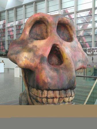 Museo de la Evolución Humana: di dalam pintu masuk museum