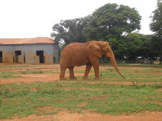 Jardim Zoologico De Brasilia: Animais