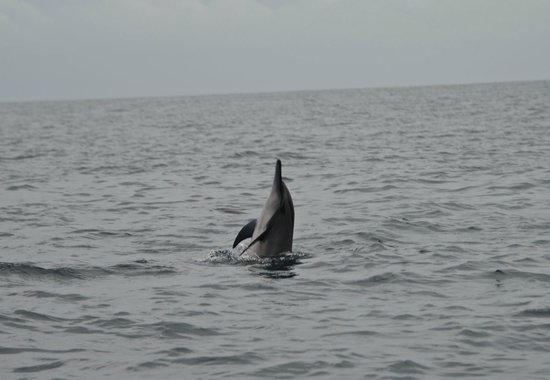 Baros Maldives: Dolphin Sighting Cruise