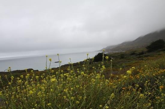 Garrapata State Park: bloemenzee