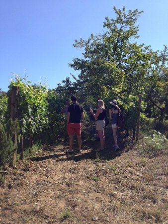 Wine Tour in Tuscany: vineyard