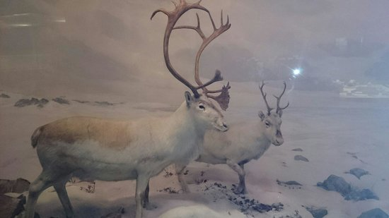 Carnegie Museum of Natural History : 剥製