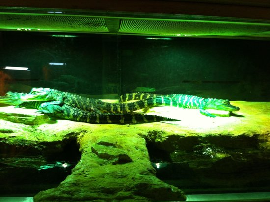crocodile picture of aquarium du perigord noir le bugue tripadvisor