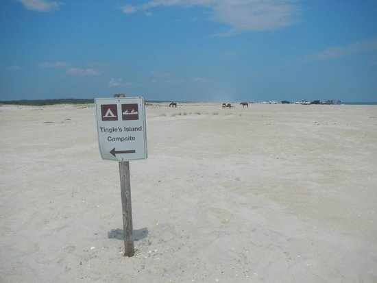 Assateague Island National Seashore Campground: Tingles Island Campsite sign from ocean see btwn km marker 16/17