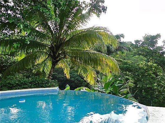 Gloucester Place: Garden coconut palm