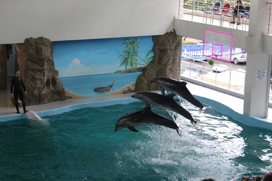 Lazarevskoye, Rusya: Дельфинарий