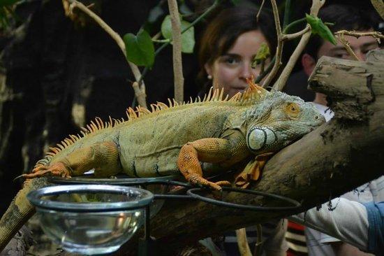 Selva Viva: Iguana