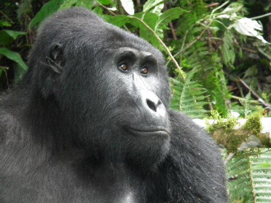 Bwindi Impenetrable National Park : I didn't do it, it was like that when I got here...