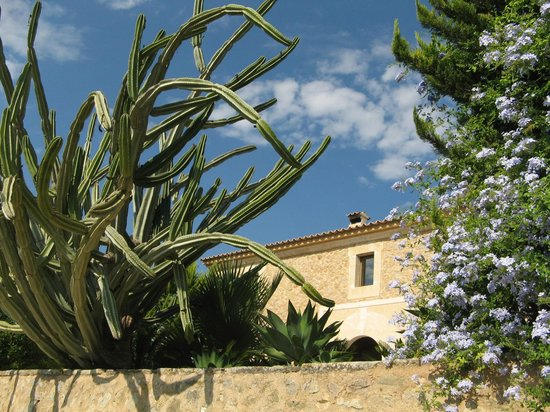 Agroturisme Son Simo Vell: végétation locale