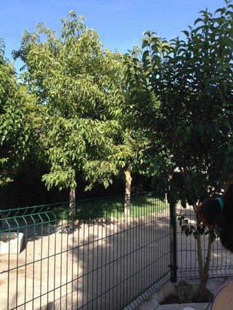 Hotel Bodega La Venta: Jardin junto a la piscina