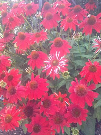 Coastal Maine Botanical Gardens: Beautiful perennials