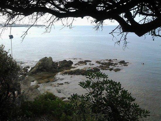 Costa Verde Hotel: Panorama dalla pineta