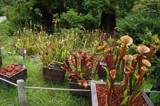Hakone Shisseikaen : 食虫植物