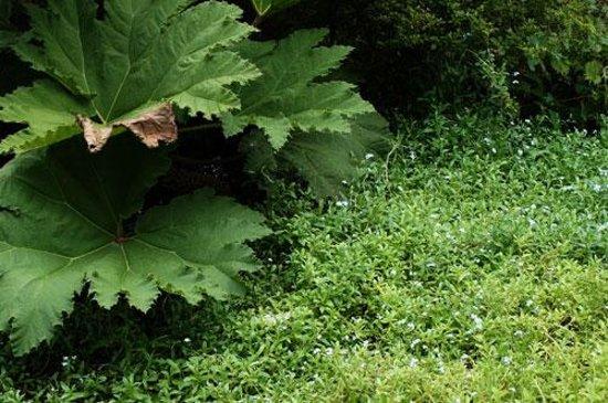 Hakone Shisseikaen : 忘れな草と