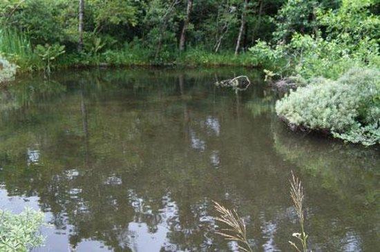 Hakone Shisseikaen : 池