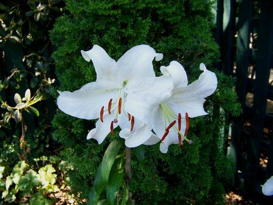 Elizabeth F. Gamble Garden: Garden Flower