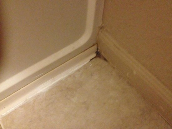 Super 8 Freeport/L.L. Bean Area : Mold and hair all over floor and walls