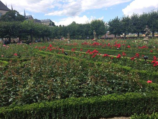 Rosengarten der Neuen Residenz: Rose garden