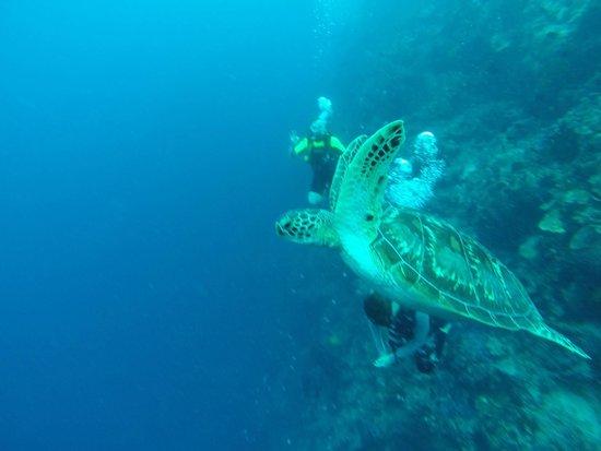 Mamaling Resort Bunaken: Schildkröte / turtle