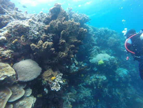 Mamaling Resort Bunaken: Korallen / corals