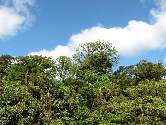 Selvatura Park: Copas del Bosque