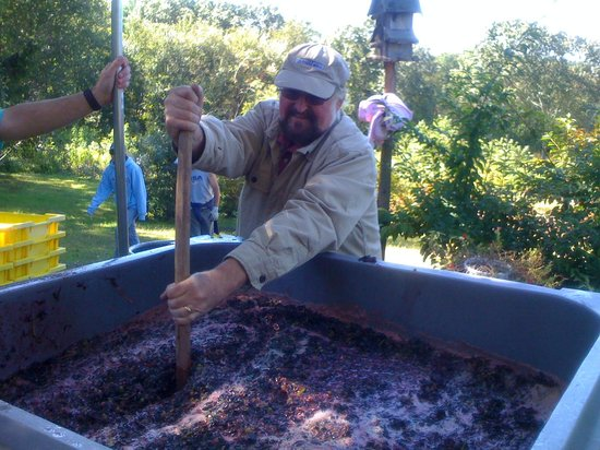 Maugle Sierra Vineyards: Primary Fermentation