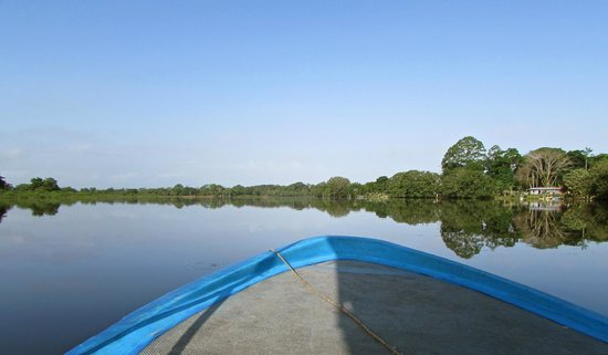 Natural Lodge Cano Negro : River flooding makes for good birding