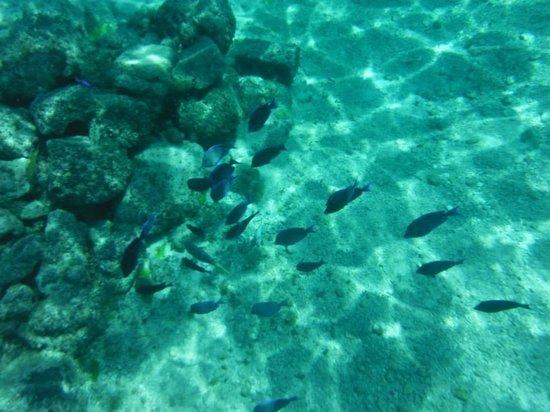 Cozumel Palace: Vista del fondo al nadar.