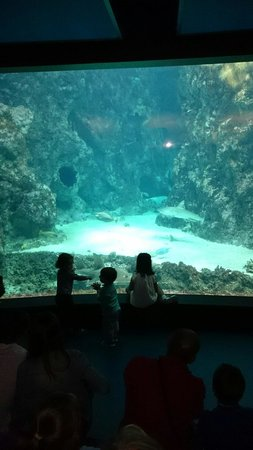 Océanopolis : Requin