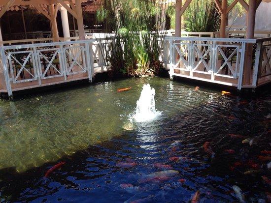 Gran Melia Golf Resort Puerto Rico: Pond