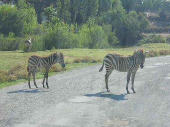 Reserve Africaine de Sigean: Sigean