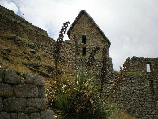Temple of the Sun: Machu Picchu
