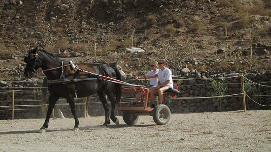 Centro hípico Horse Riding Adventures in Tenerife: Our driving lesson.