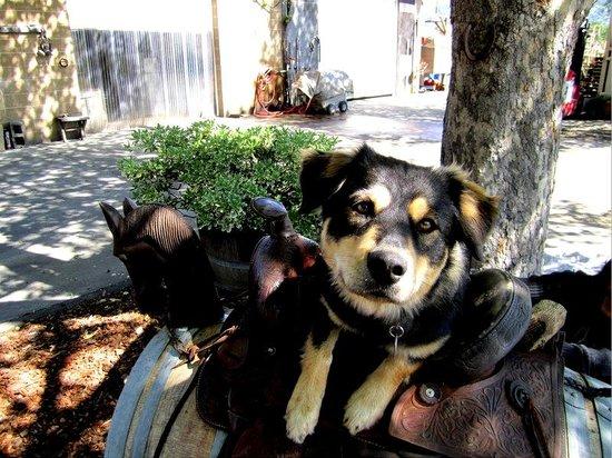 Saddleback Cellars: The winery dog - Chloe!