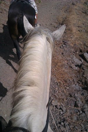 Horse Riding Adventures in Tenerife: The lovely Leon on one of our hacks.