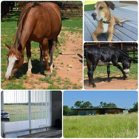 Rancho Loma: Horse Donkey and the Dog