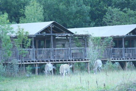 Les Lodges du PAL : La faune à proximité (2)