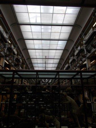 National Museum of Ireland - Natural History : secondo piano